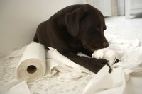 He doesn't actually want to eat toilet paper, he's just bored.