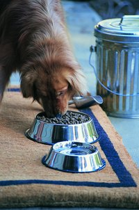 Your canine companion needs a balanced diet to help avoid issues with pica.