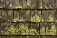Moss can cause a roof to retain moisture.