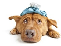 Skin burns can be serious and require immediate veterinarian care.
