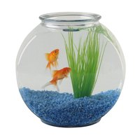 Goldfish need a real aquarium, not a bowl, to thrive.