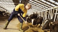 Challenges Affecting the Management of Small-Scale Dairy Industries