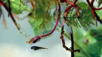 Facts on Tadpoles for Kids