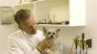 How to Get A Job as an Animal Ultrasound Technician