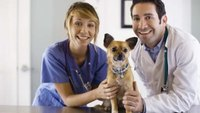 What Specific Skills Do You Need to Be a Veterinarian?