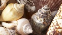 Seashell Craft Business Ideas