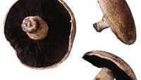 Is It All Right to Eat the Stems of Portobello Mushrooms?