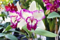 Mold Fungus On Orchids Ehow
