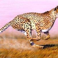How Fast Do Cheetahs Run How Fast Does a...