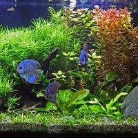How To Clean Hard Water Scale Buildup On A Fish Tank Ehow