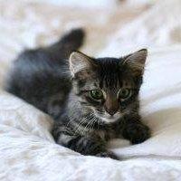 cat socks with ears