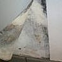how to get rid of mold in a basement ehow