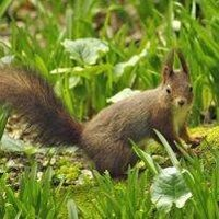 How To Get Rid Of Squirrels In The Lawn Ehow