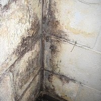 how to stop mold growth in wet basements ehow