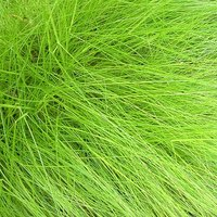 Types of ornamental grasses ehow for Ornamental oat grass varieties