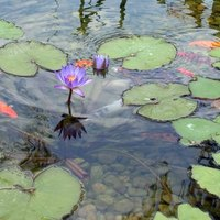 How to repair preformed molded ponds ehow for Moulded fish ponds