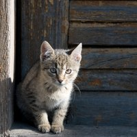 How To Get Rid Of Cat Urine From Carpet Ehow