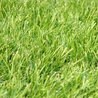 How To Plant Winter Ryegrass In North Texas Ehow