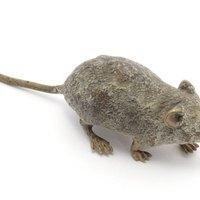 how to kill mice behind walls