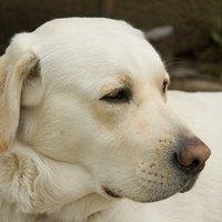 Rare Dog Diseases   eHow