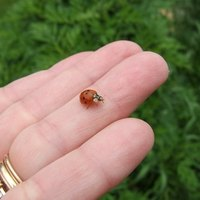 How To Get Rid Of Asian Ladybugs 112