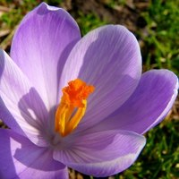 Perennial Flowers That Bloom Year Round Ehow