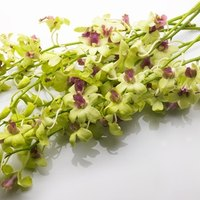 how to extend the life of fresh cut flowers ehow