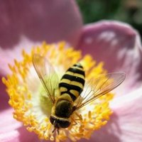 how to get rid of honey bees in yard