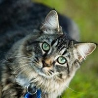 obscure cat names