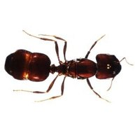 how to kill ants with white vinegar ehow. Black Bedroom Furniture Sets. Home Design Ideas