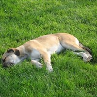 How To Fix Yellow Spots And Dog Urine Odors On Grass Ehow