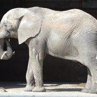 How To Make An Elephant Armature Ehow
