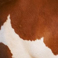 How To Make A Faux Cow Print Rug Ehow
