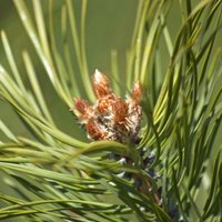 Insecticide for Bagworms | eHow