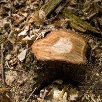 how to kill a tree stump with oil ehow