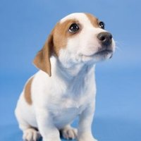 how to stop puppy peeing on carpet
