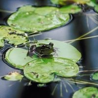 Algaecide For Ponds That Is Safe For Fish Frogs Ehow