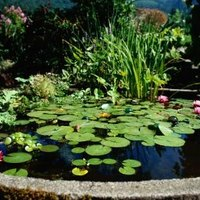 Do i need to have my pond pumps running all the time ehow for Garden pond do you need a pump