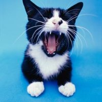 stop male cat from spraying