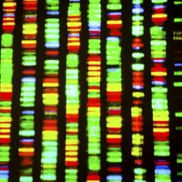 Pros and Cons of DNA Profiling