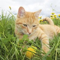 Can Cats Eat Milk Thistle