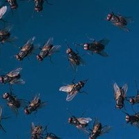 How to Get Rid of Bugs and Midges in the Yard   eHow