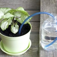 How Does A Self Watering Planter Work Ehow