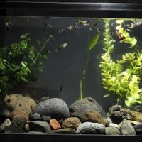Should You Turn Salt Lamps Off : Should I Turn My Fish Aquarium Light Off at Night? eHow
