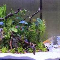 How to get rid of aquarium snails ehow for How to get rid of snails in fish tank
