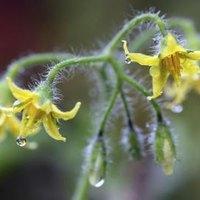 grow california ehow