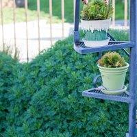 how to get rid of earwigs in flower garden