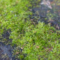 How To Use Tide Detergent For Moss Removal With Pictures