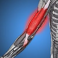 what are the causes of muscle fatigue? | ehow, Muscles