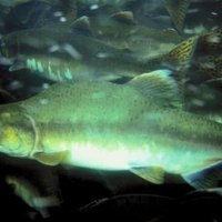 A list of fish hatcheries in west virginia ehow for Wv fish stocking